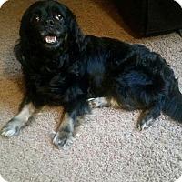 Adopt A Pet :: Juliet in CT - Manchester, CT