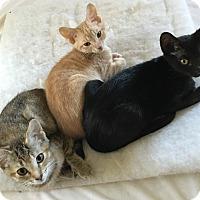 Adopt A Pet :: Various Kittens - Birmingham, AL