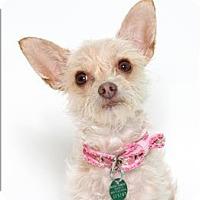 Adopt A Pet :: December - San Luis Obispo, CA