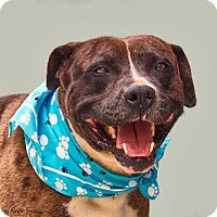Adopt A Pet :: Tuff Man - Lincolnton, NC