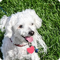 Adopt A Pet :: Noel - Meridian, ID
