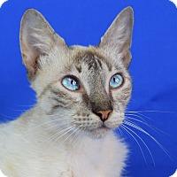 Adopt A Pet :: Ruby - Carencro, LA