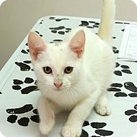 Adopt A Pet :: Blanco - Concord, NC