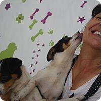 Adopt A Pet :: Roberto and Roberta - San Diego, CA