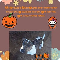 Pit Bull Terrier Mix Dog for adoption in Springtown, Texas - Baby