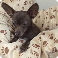 Adopt A Pet :: Eva - Gridley, CA