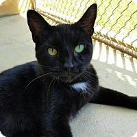 Adopt A Pet :: Quinn - Umatilla, FL