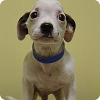 Adopt A Pet :: Nixon - Waldorf, MD