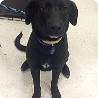 Adopt A Pet :: Bailey in CT - Manchester, CT