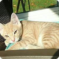 Adopt A Pet :: Blaze - Horsham, PA
