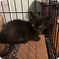 Adopt A Pet :: EBONY - Brea, CA