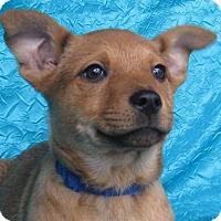 Adopt A Pet :: Good News Goldie - Cuba, NY