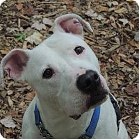 Adopt A Pet :: Diamond - Walden, NY