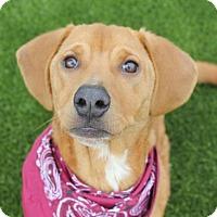 Adopt A Pet :: KERRY - Bryan, TX