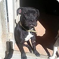 Adopt A Pet :: Willa - New orleans, LA