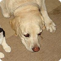 Adopt A Pet :: Chuka - Golden Valley, AZ