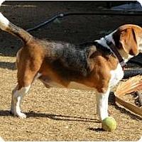 Adopt A Pet :: Tanner - Phoenix, AZ