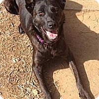 Adopt A Pet :: Xena in SC - Jamestown, CA