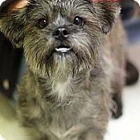 Adopt A Pet :: Sybill - Tinton Falls, NJ