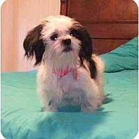 Adopt A Pet :: Blanche - Mooy, AL