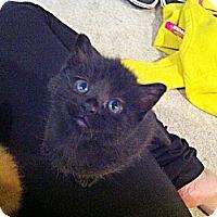 Adopt A Pet :: Tulip - Edmonton, AB