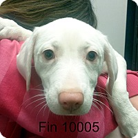 Adopt A Pet :: Fin - baltimore, MD