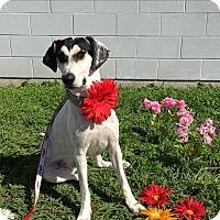 Adopt A Pet :: Rocky - Lockhart, TX