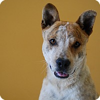 Adopt A Pet :: Tarzan - Ridgway, CO