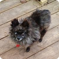 Adopt A Pet :: Marble - conroe, TX