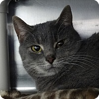 Adopt A Pet :: Charity - Elyria, OH
