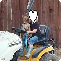Adopt A Pet :: SUNSHINE - Gustine, CA