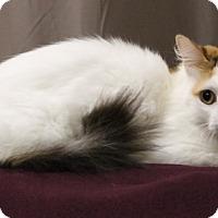 Adopt A Pet :: Suzie Q - Seminole, FL