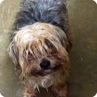 Adopt A Pet :: SOPHIE JOELLE - Toronto, ON