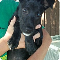 Adopt A Pet :: Matilda - Norris City, IL