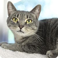 Adopt A Pet :: Jennapurr - Whitehall, PA