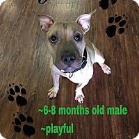 Adopt A Pet :: Rufus - Colmar, PA