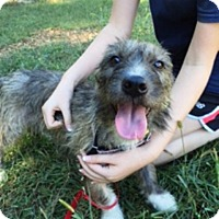 Adopt A Pet :: Angela Sarafyan - Jersey City, NJ