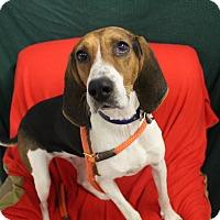 Adopt A Pet :: Noel - Melbourne, KY