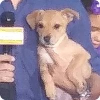 Adopt A Pet :: Dana - Oakland Park, FL