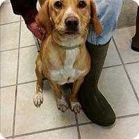 Adopt A Pet :: Marley - Chippewa Falls, WI