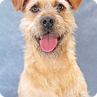 Adopt A Pet :: Bruce - Encinitas, CA