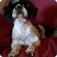 Adopt A Pet :: Daisy - Campbell, CA