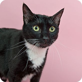 Declawed Cat For Adoption In Delaware