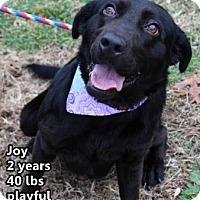 Adopt A Pet :: Joy Luck - Northbrook, IL