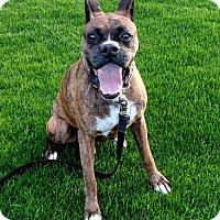 Adopt A Pet :: Titus - Phoenix, AZ