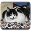 Photo 2 - Domestic Shorthair Cat for adoption in Howell, Michigan - Leah