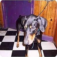 Adopt A Pet :: diesel - New Richmond, OH