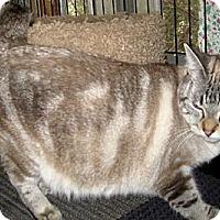 Adopt A Pet :: Lacie - Dallas, TX