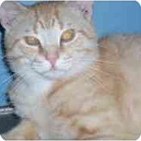 Adopt A Pet :: Sugar Ray - Hamburg, NY