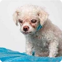 Adopt A Pet :: Tush - New York, NY